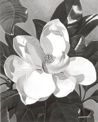 White Magnolia by Marianne Hornbuckle