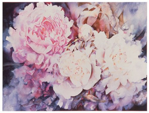Peonies by David Maddern