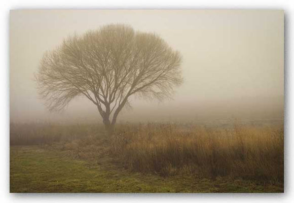 Tree in Field by David Lorenz Winston