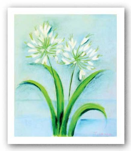 White Agapanthus by Dona Turner