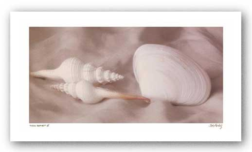 Shell Sonnet IV by Judy Mandolf