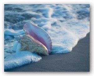 Conch In Surf by Ruth Burke