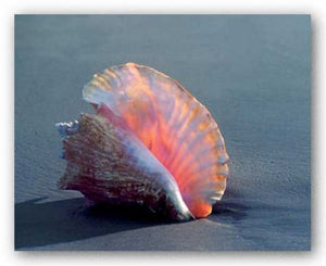 Conch by Ruth Burke