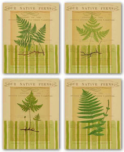 Native Fern Set by Studio Voltaire