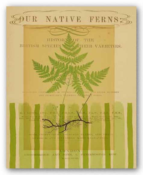 Native Fern II by Studio Voltaire