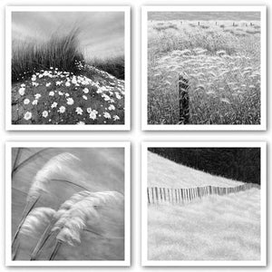 Fence And Field-Grasses In The Sky-Fence Posts-Sand Daisies Set by Chip Forelli