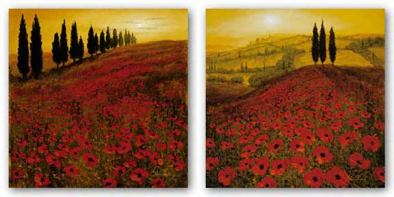 Poppies, Poppy Field Set by Steve Thoms