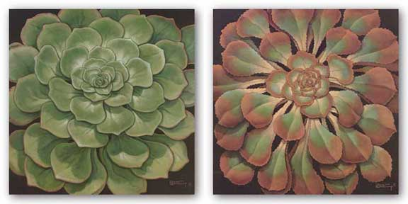 Succulent Set by Janet Kruskamp