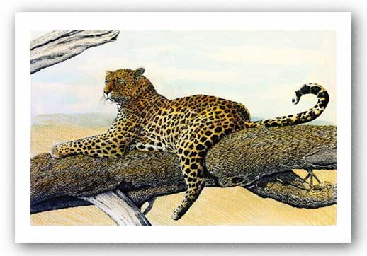 Resting Leopard by Charles Berry