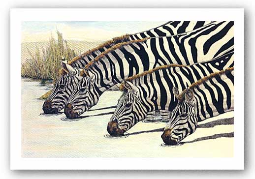 Four Zebras Drinking by Charles Berry