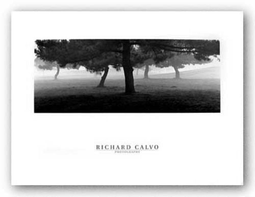 Trees In The Fog by Richard Calvo