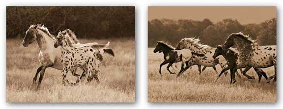 Appaloosa Run-The Appaloosa Set by Robert Dawson