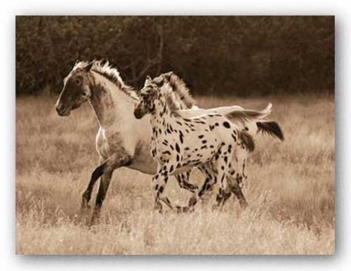The Appaloosa by Robert Dawson