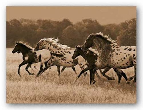 Appaloosa Run by Robert Dawson