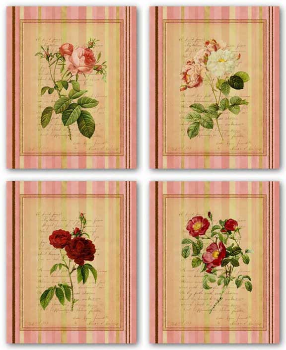Botanical Rose Set by Studio Voltaire