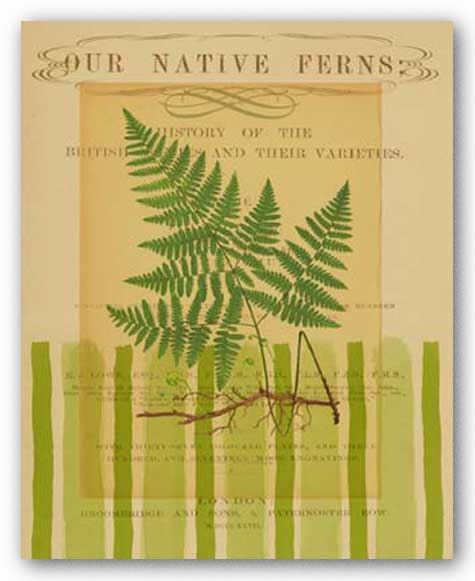 Native Fern I by Studio Voltaire