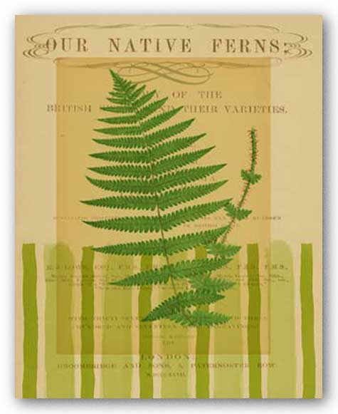 Native Fern IV by Studio Voltaire