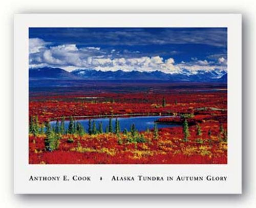 Alaska Tundra In Autumn Glory by Anthony Cook