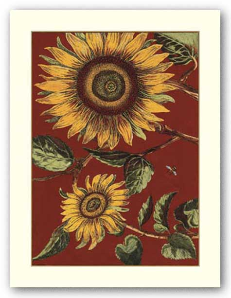 Sunflower Stars I by Old World Prints