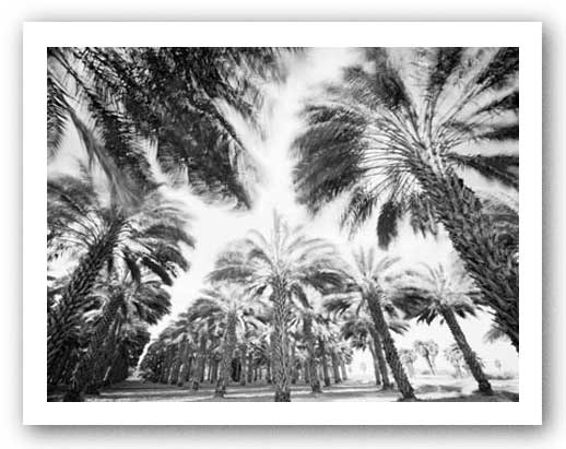 Spinning Palms by Chip Forelli