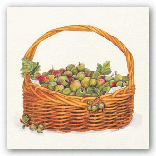 Basket Of Gooseberries by Bambi Papais