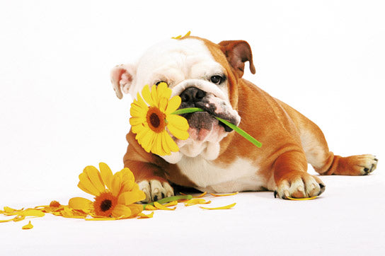 Good Morning - Dog with Flowers
