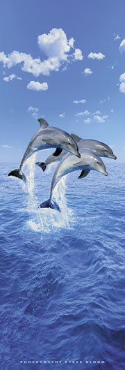 Three Dolphins by Steve Bloom