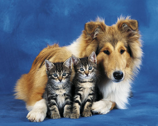 Friends Forever - Dog and Kittens