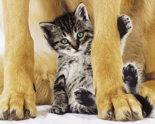 Safe and Pretty - Dog and Kitten