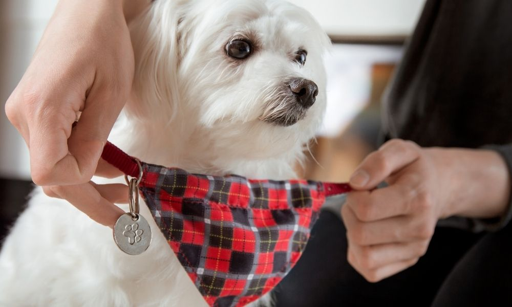 Best Crafting Project Ideas for Your Pet
