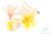 Hawaiian Flower Lei Luxury Organic Perfume Sample