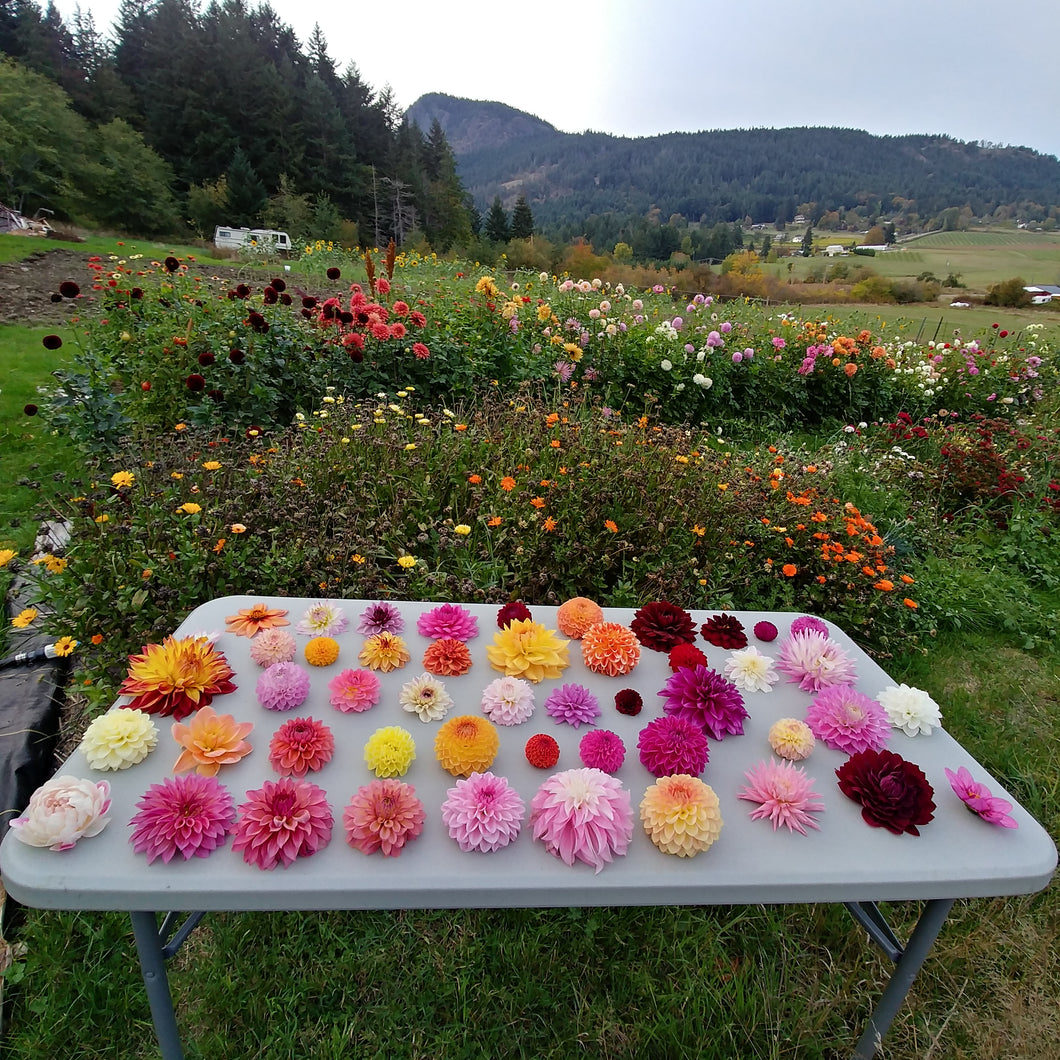 Private One-to-One Workshop: Flower Growing 101