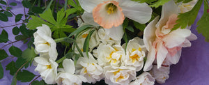 Give the Gift of Spring with an Assortment of Our Favourite Specialty Flower Bulbs