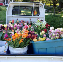 What to Plant Now for Spring Flowers - Includes Spring Bulbs to Plant at Home - November 3
