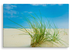 Grass on Beach