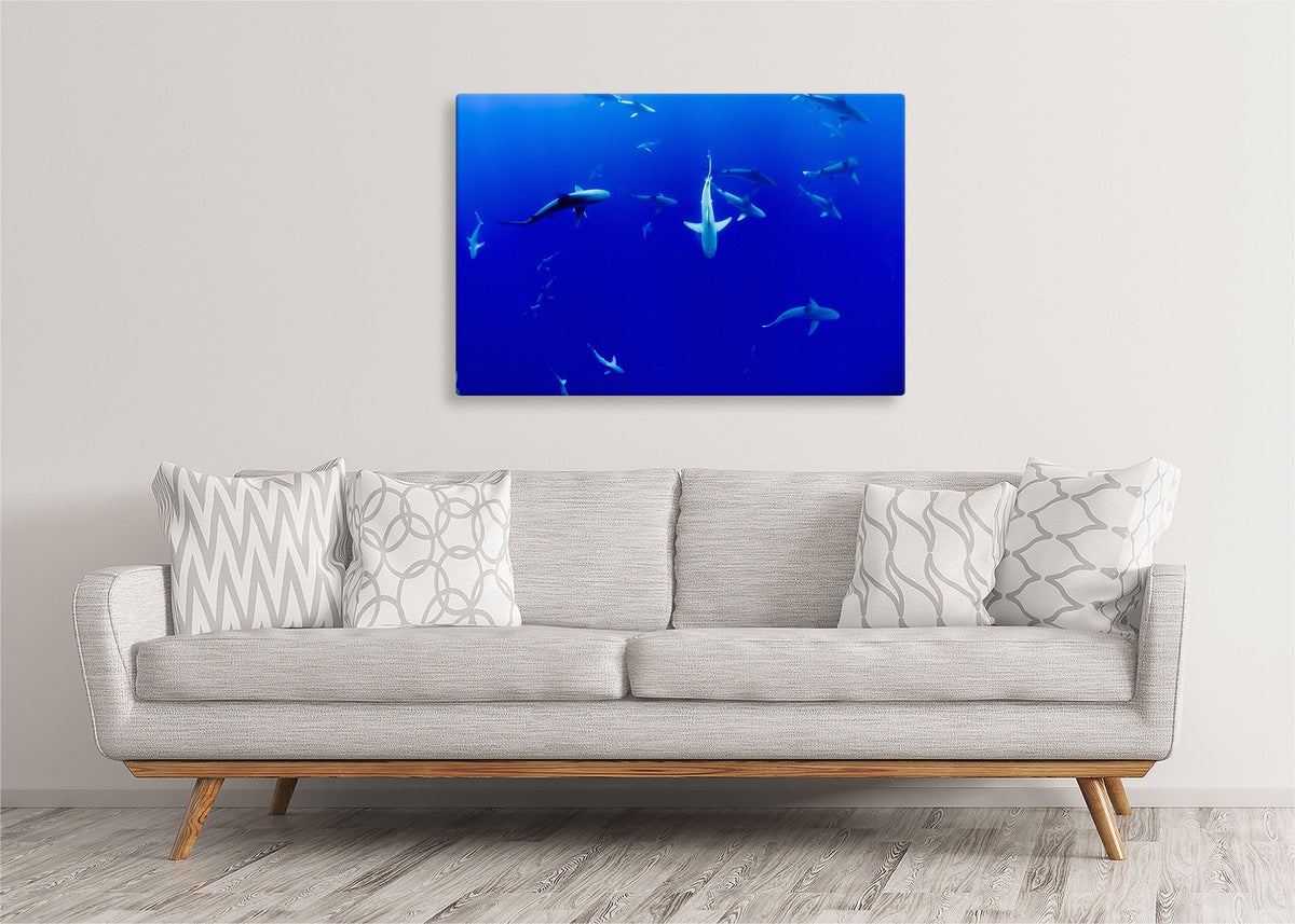 Sharks in the Blue