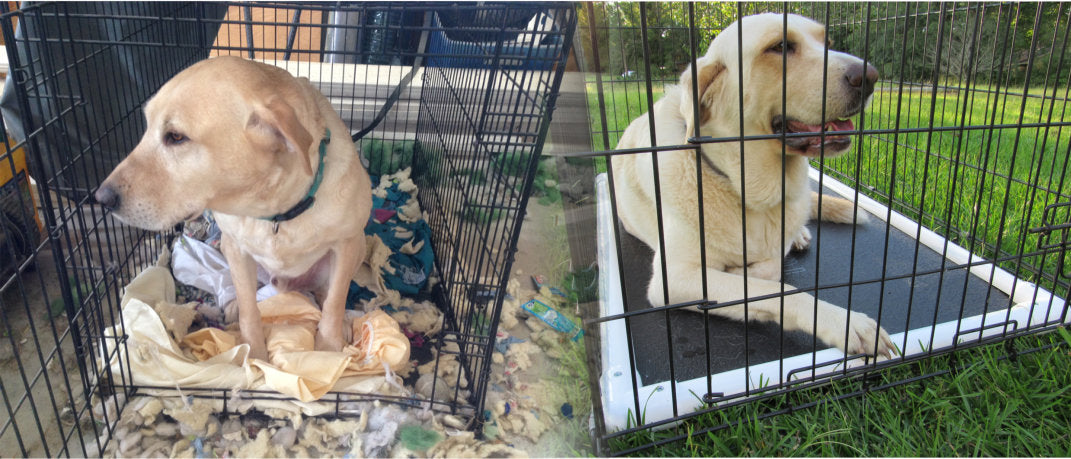 chew proof crate pad versus regular crate pad