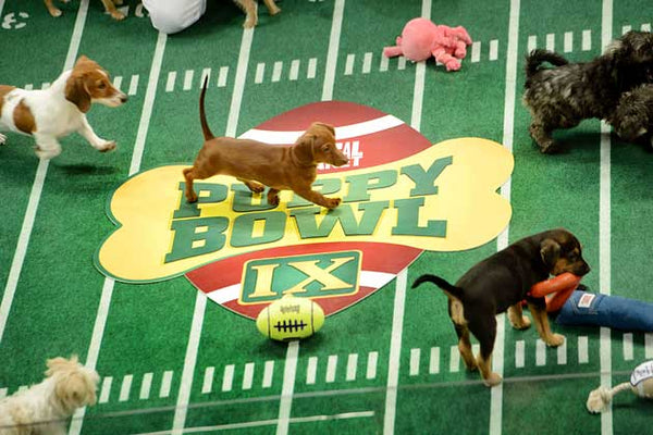 Super Bowl Pups!