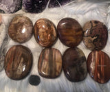 Petrified wood flat palm stone - Angel Eyes Shop