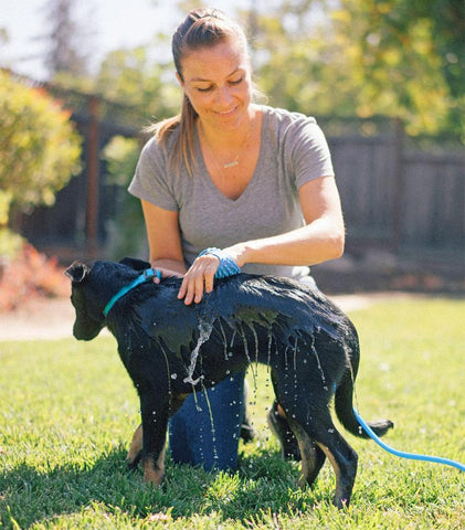 Aquapaw Dog Scrubber & Sprayer