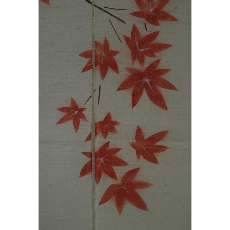 Red Japanese Maple on White (08KD04)