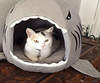 Image of Shark Shape Cat Bed