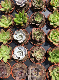 Succulent Fertilizers