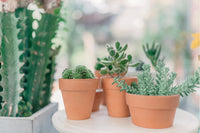 Succulent 101 : A Beginner's Guide