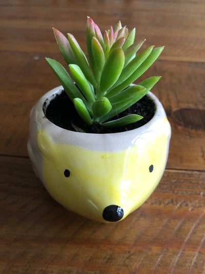 Adorable Hedgehog Succulent Plant Pot