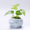 FREE Adorable Blue Baby Elephant Succulent Planter