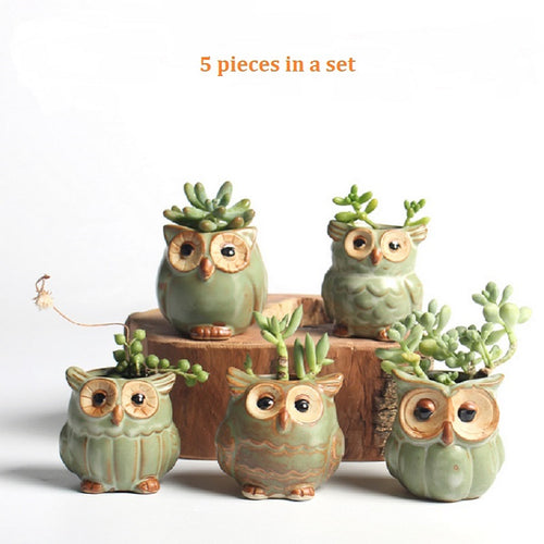 Wise Owl Succulent Pots - Set of 5