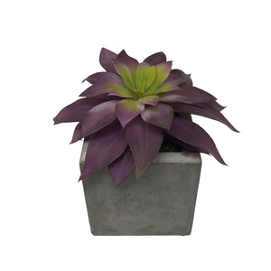 Concrete Pot With Succulent