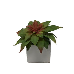 White Square Pot With Succulents