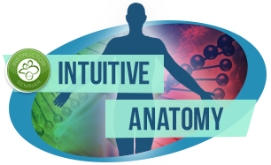 Intuitive Anatomy IA 人體直觀課程